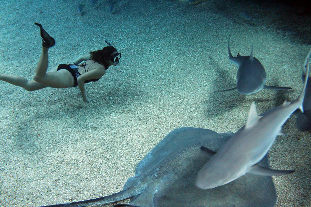 Kimi Werner with Sharks & Rays