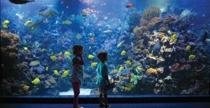 maui ocean center, things to do in maui, hawaii fish