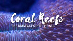 Coral Reefs: The Rainforest of the Sea