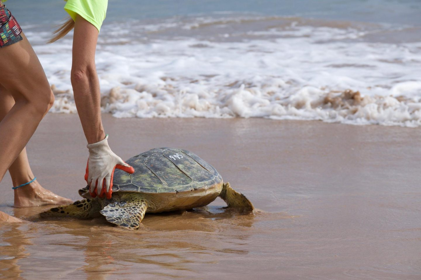 maui ocean center, things to do in maui, sea turtles