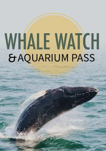 Whale Watch Product Poster