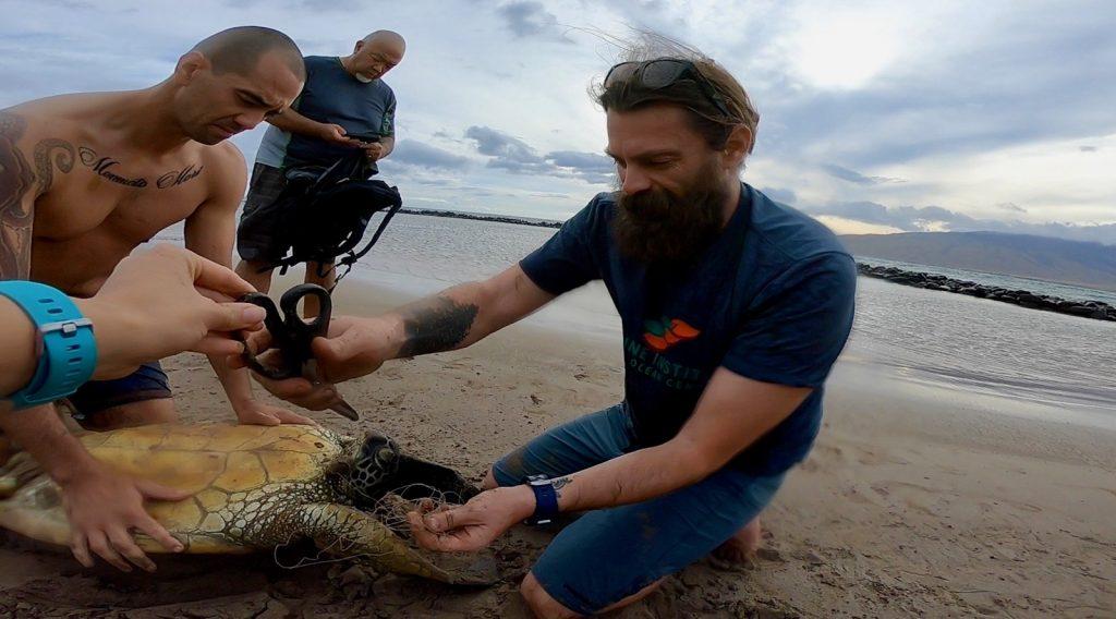 MOCMI Turtle Stranding Response