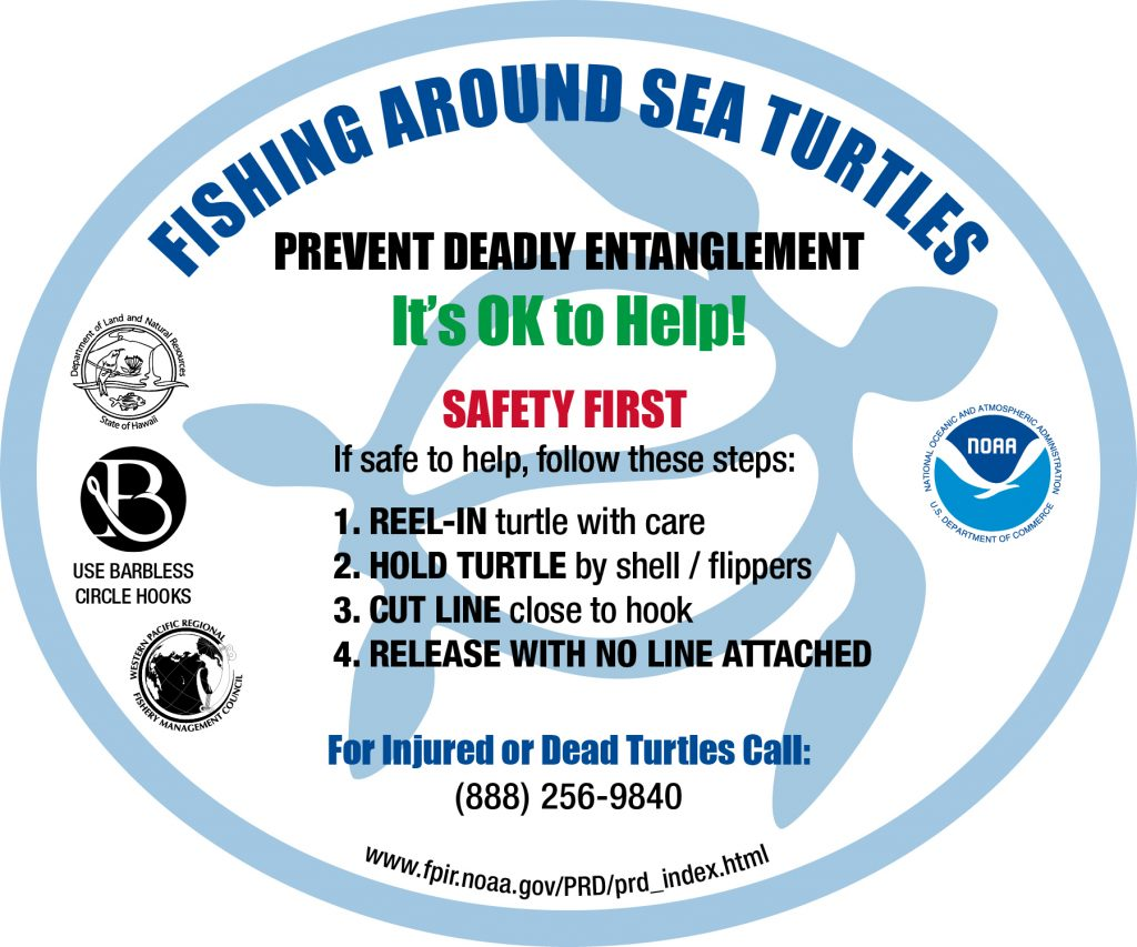 Fishing Around Sea Turtle Program