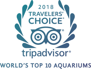 Tripadvisor2018World'sTop10Aquarium-color-2