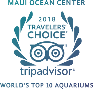 Tripadvisor2018World'sTop10Aquarium-color