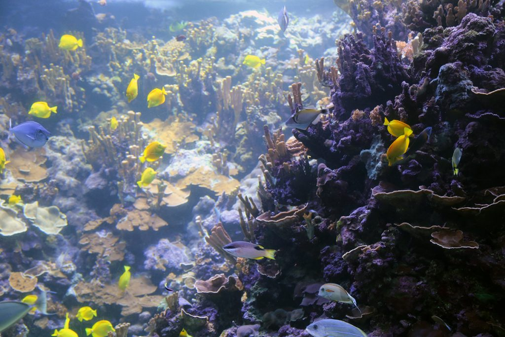 Coral Reefs Rainforests of the Sea