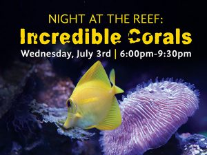 Maui-Ocean-Center-Night-at-the-Reef