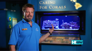 Corals Thumnail