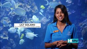 Marine Life Thumnail