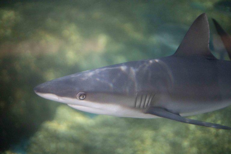 Meet the New Shark Pups!