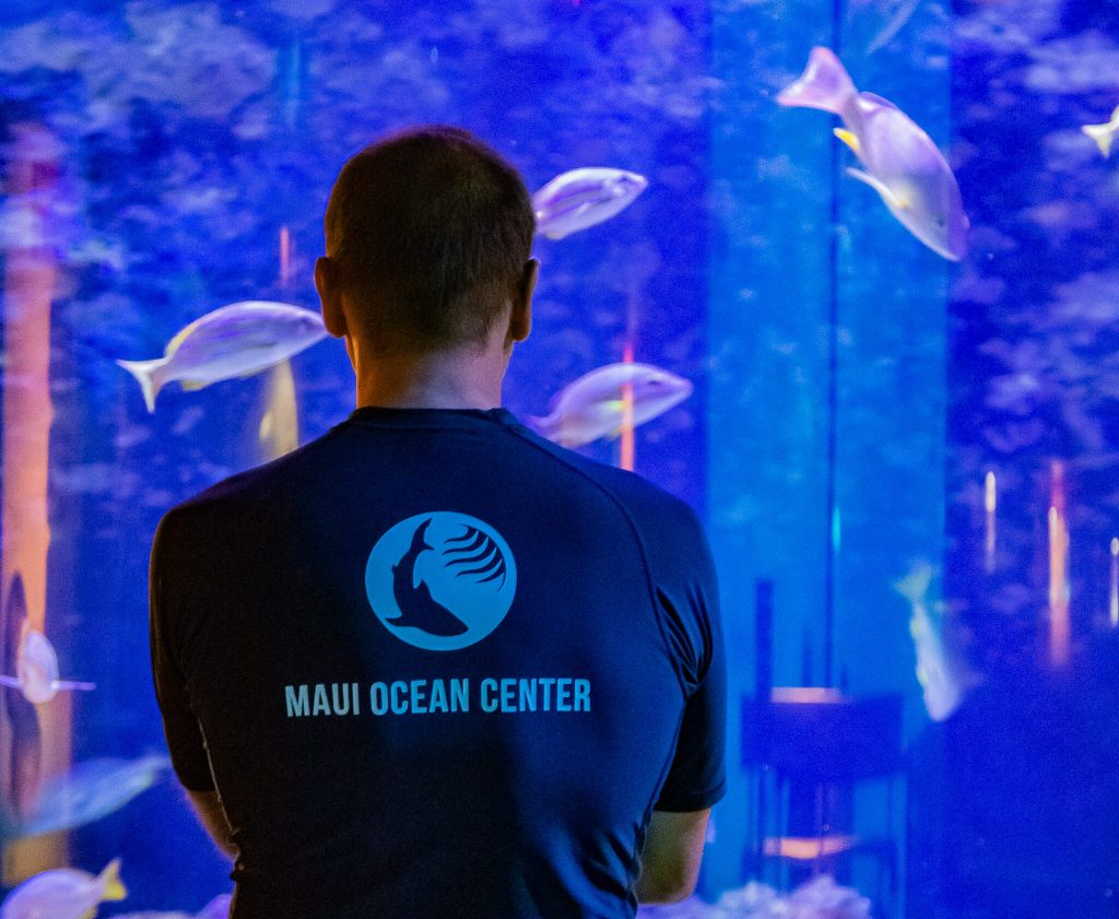 Harry of team Manō assesses exhibits for improvements