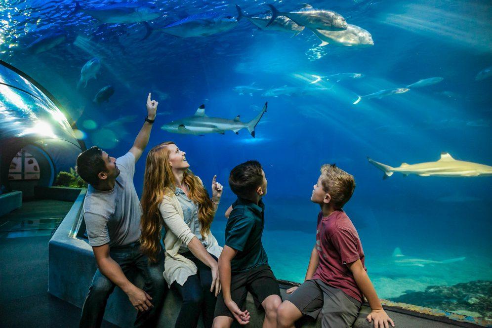 The Open Ocean Exhibit