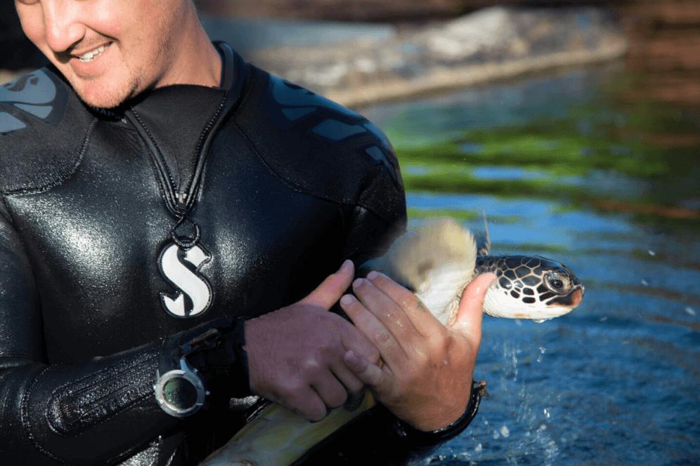 Turtle Lagoon Exhibition