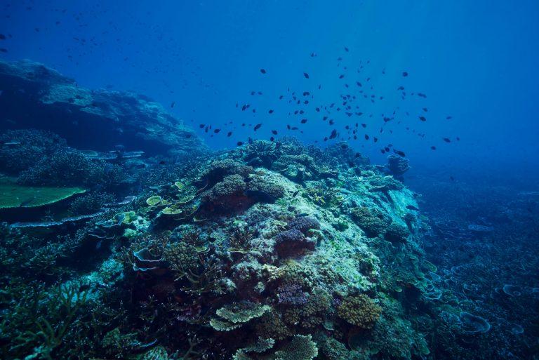 Sea Talk: Hohonu Moana 2015