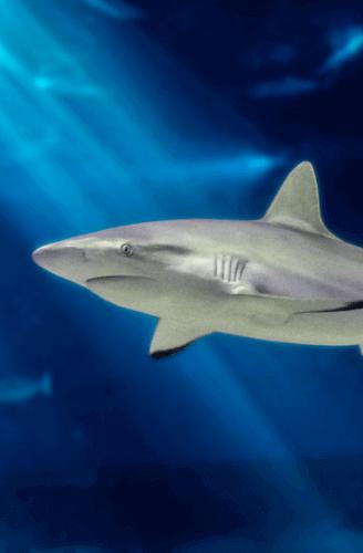 Shark in Open Ocean