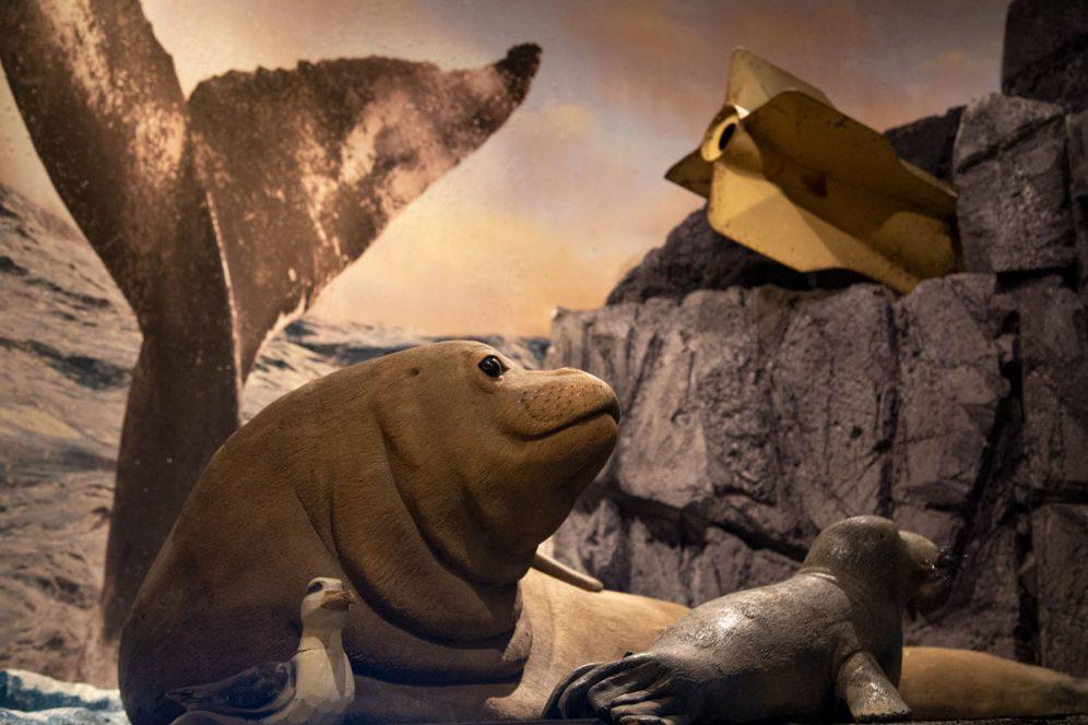 Kahoolawe Exhibit Marine Life