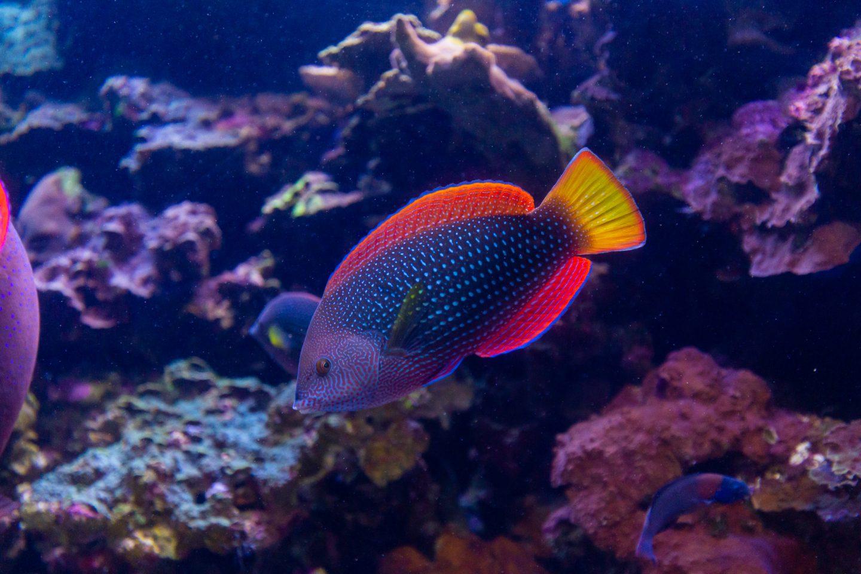 Living Reef Exhibition