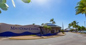 Maui Ocean Center Reopens With Health and Well-Being in Mind